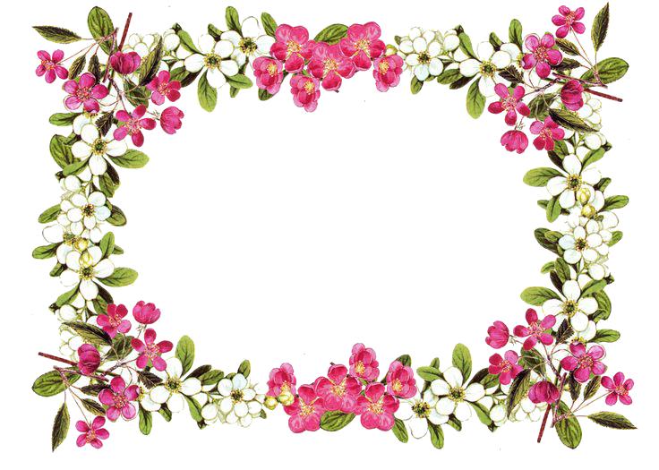Flowers Borders PNG - 15469