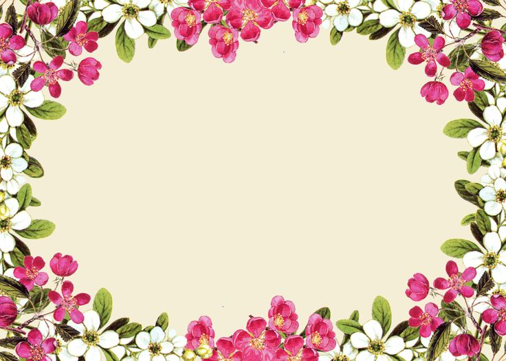 Flowers Borders PNG - 15475