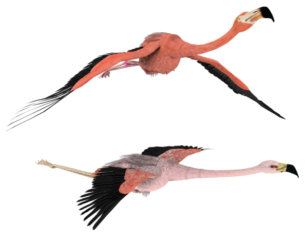 Flamingo Png Hd PNG Image - Fly HD PNG