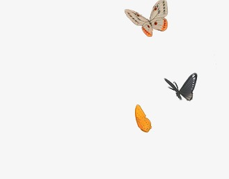 Group Fly Butterfly, Swarming, HD, Butterfly Free PNG Image - Fly HD PNG