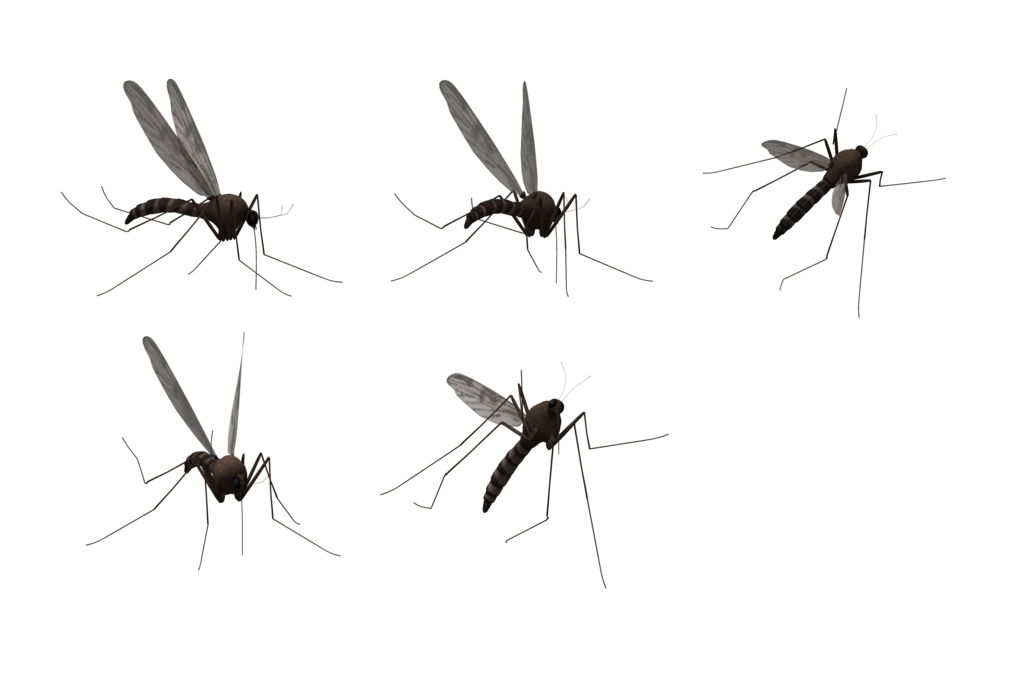 Mosquito Png Hd PNG Image - Fly HD PNG