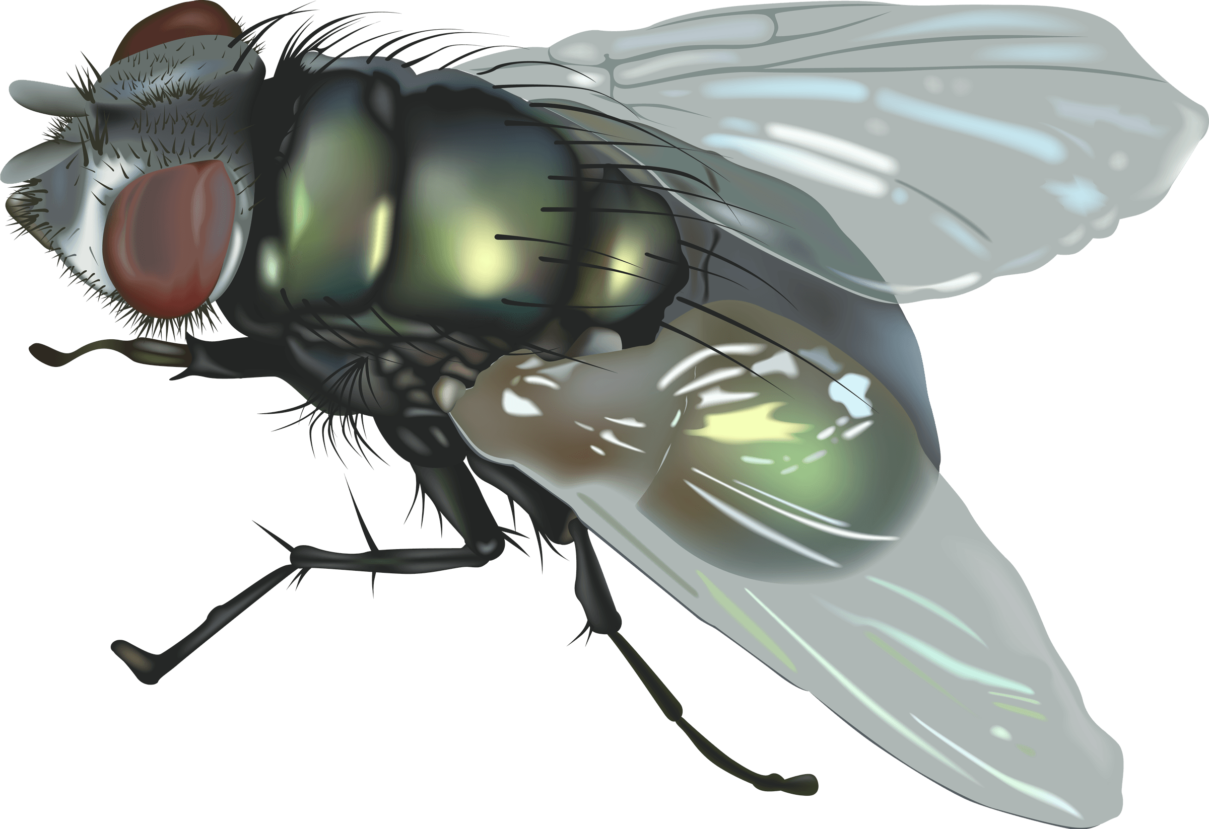 Download PNG image - Fly Png Image - Fly PNG