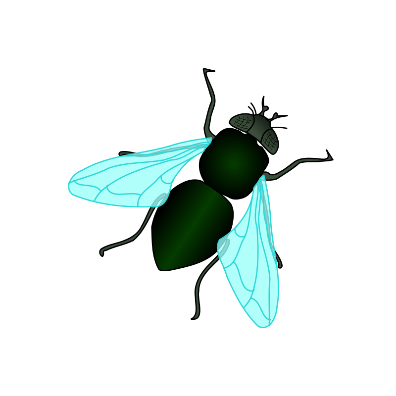 Filename: BiaAb69AT.png - Fly PNG