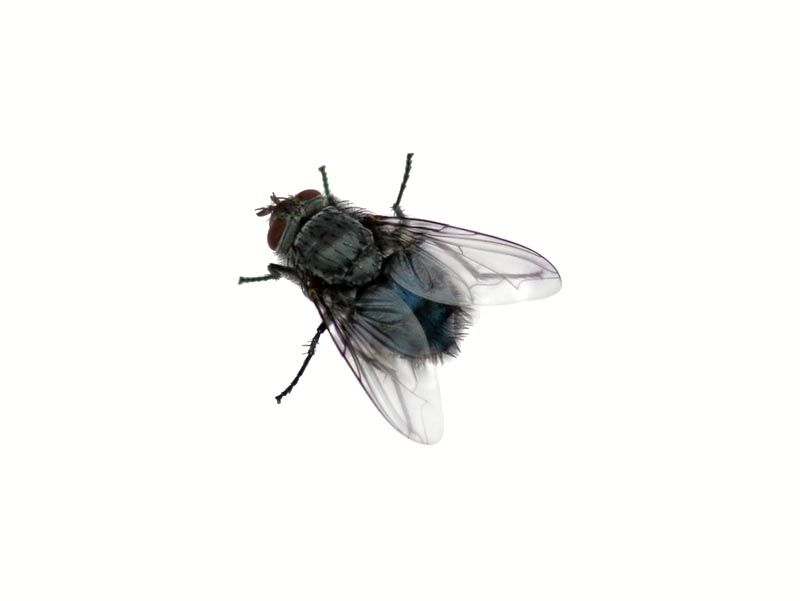 fly copy. PlusPng.com  - Fly PNG