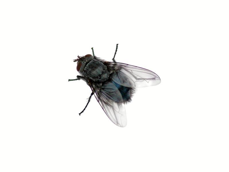 fly copy. PlusPng.com