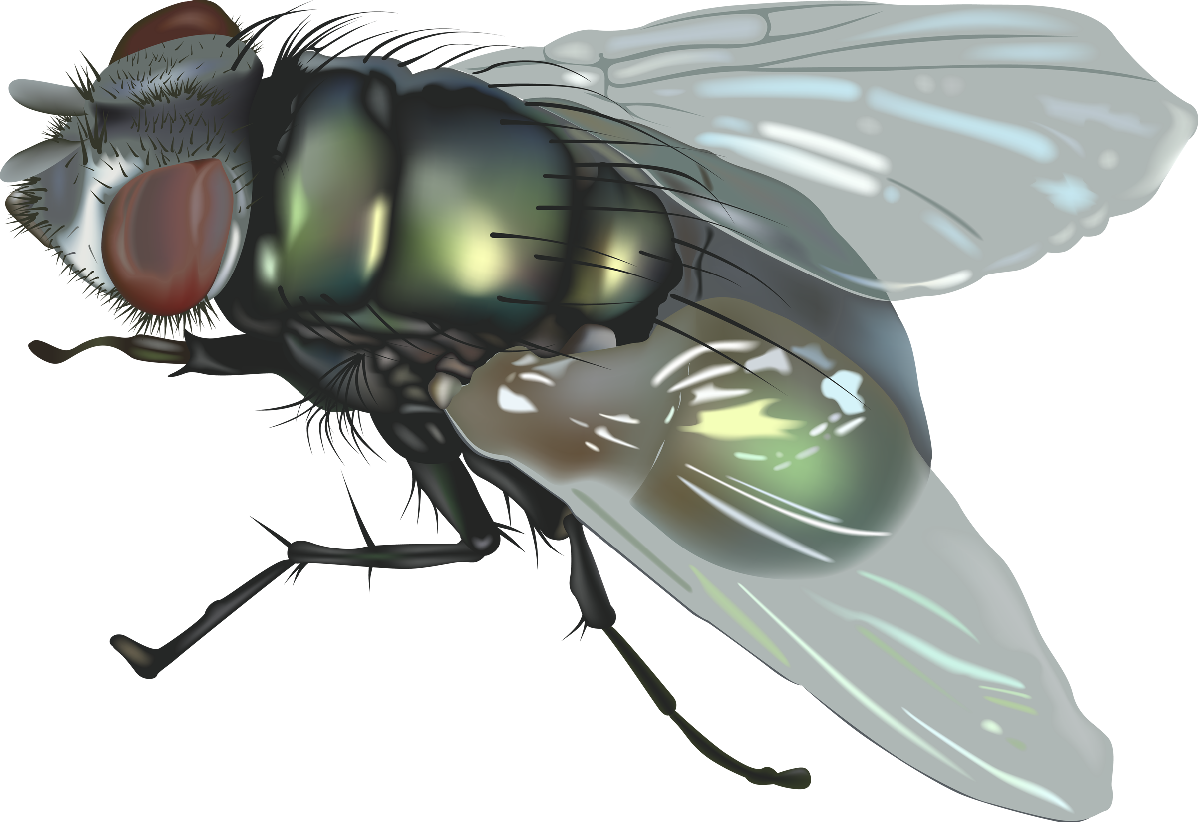 fly PNG image - Fly PNG