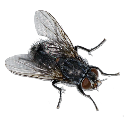 Pest Control Of Flies