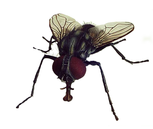 Fly PNG - 10784