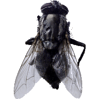 Fly Png Image PNG Image - Fly PNG