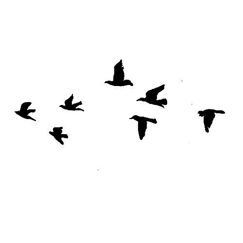 Flying Bird PNG - 22972
