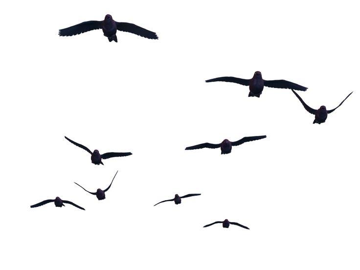 Flying Bird PNG - 22980