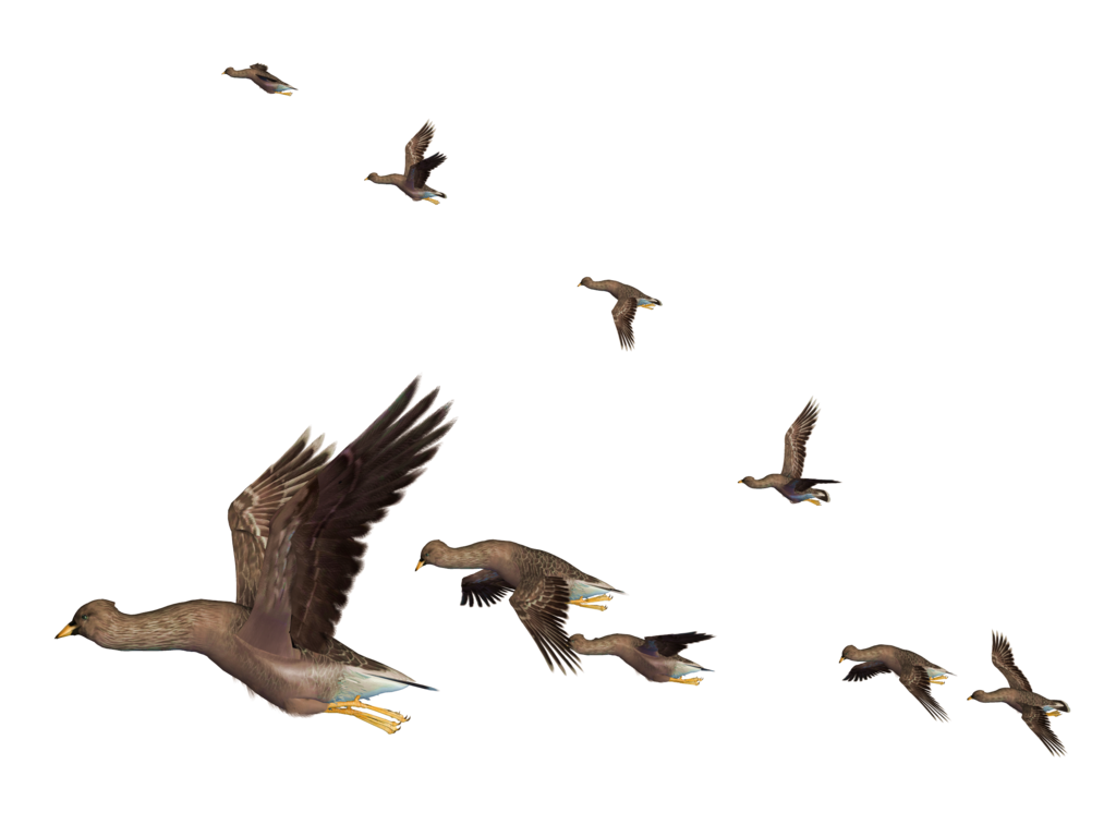 Flying Birds Png image #3485
