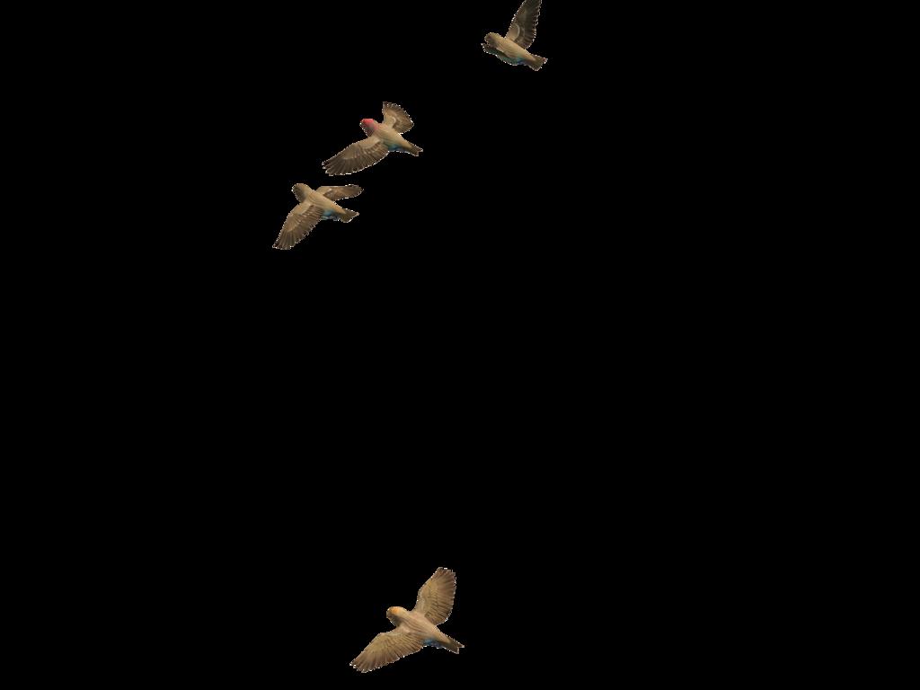 Flying Bird PNG - 22971