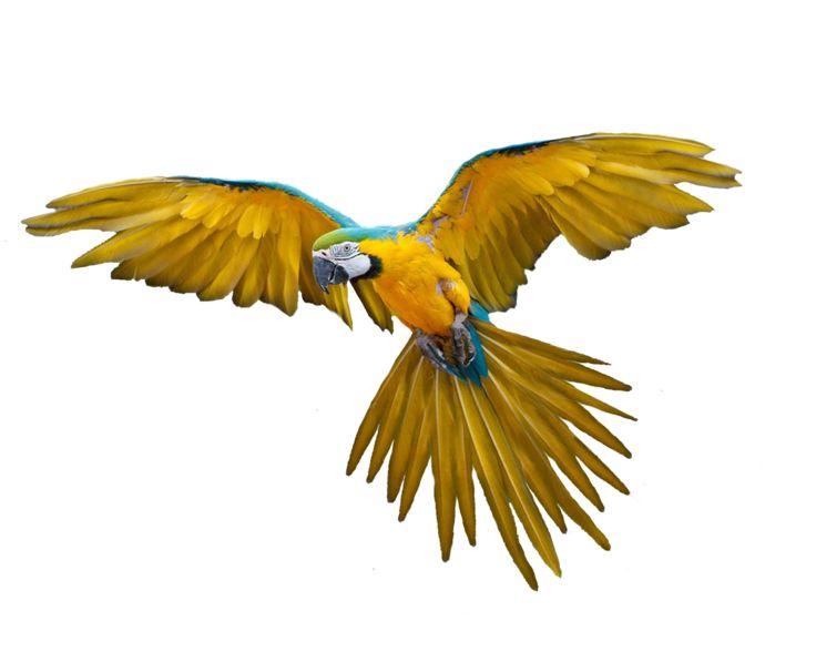 Flying Bird PNG - 22968