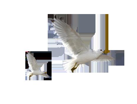 Flying Bird PNG - 22969