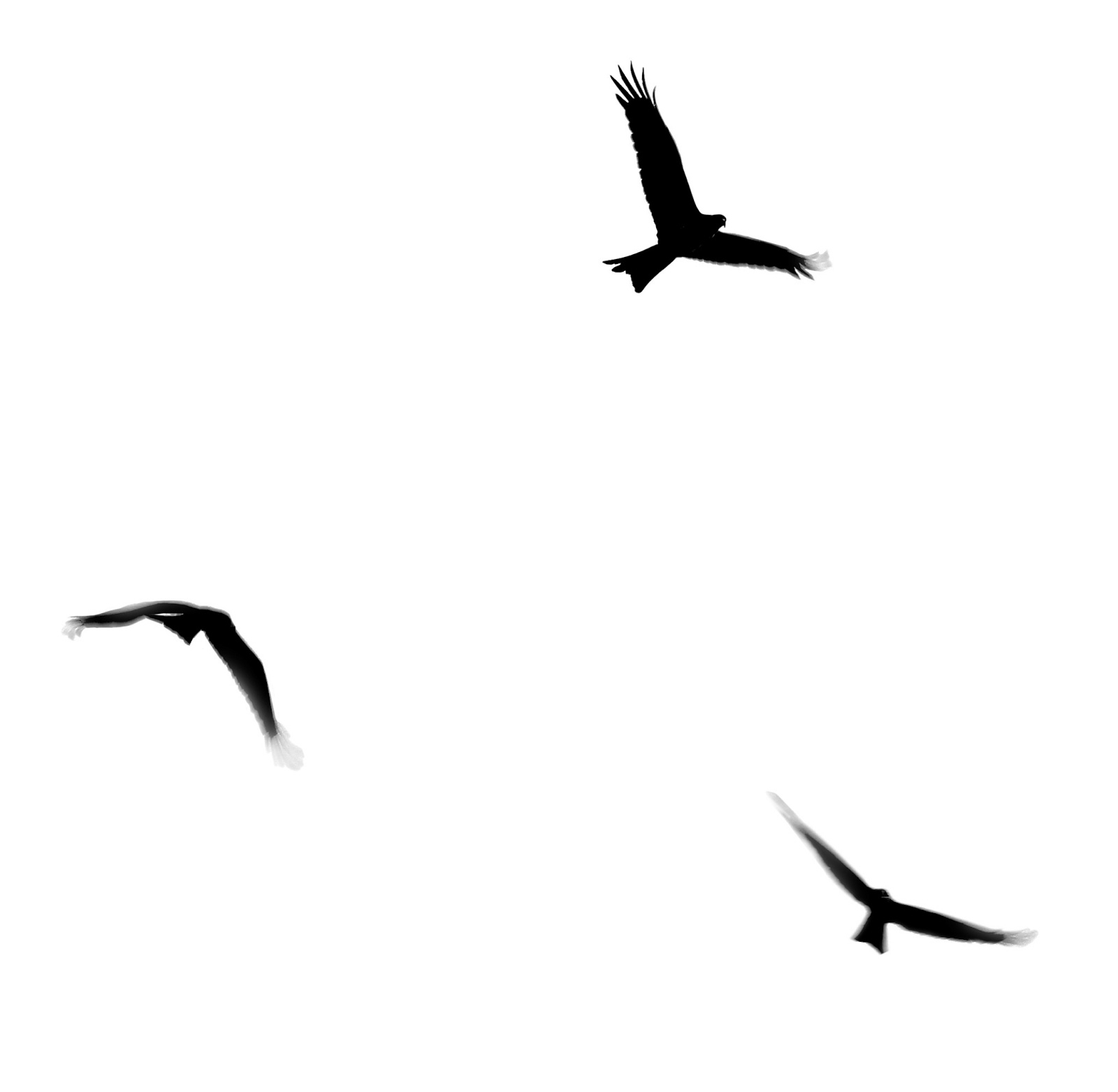Stock Pictures: Silhouettes of birds in flight - Flying Bird PNG