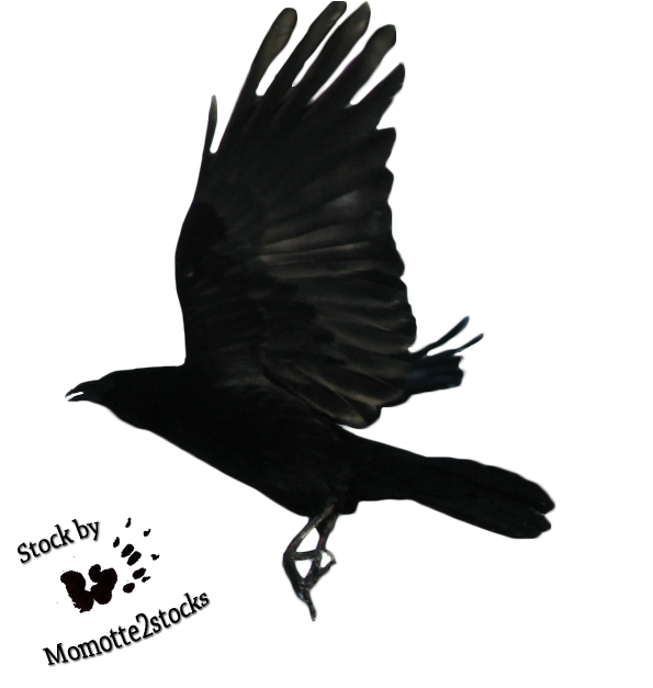 Flying Crow PNG Black And White-PlusPNG.com-595 - Flying Crow PNG Black And White