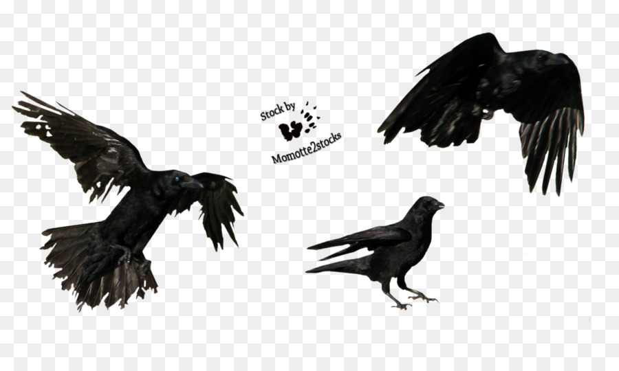 Flying Crow PNG Black And White - 153894