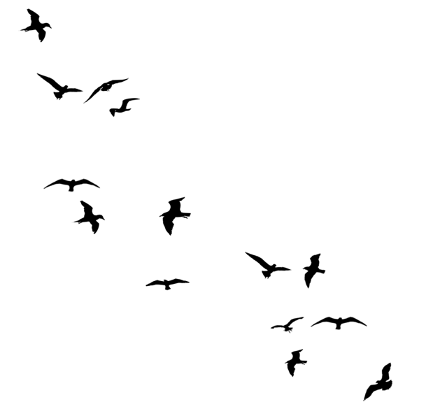 Birds flying away silhouette line - Flying Crow PNG Black And White