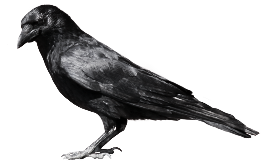 Flying Crow PNG Black And White - 153890