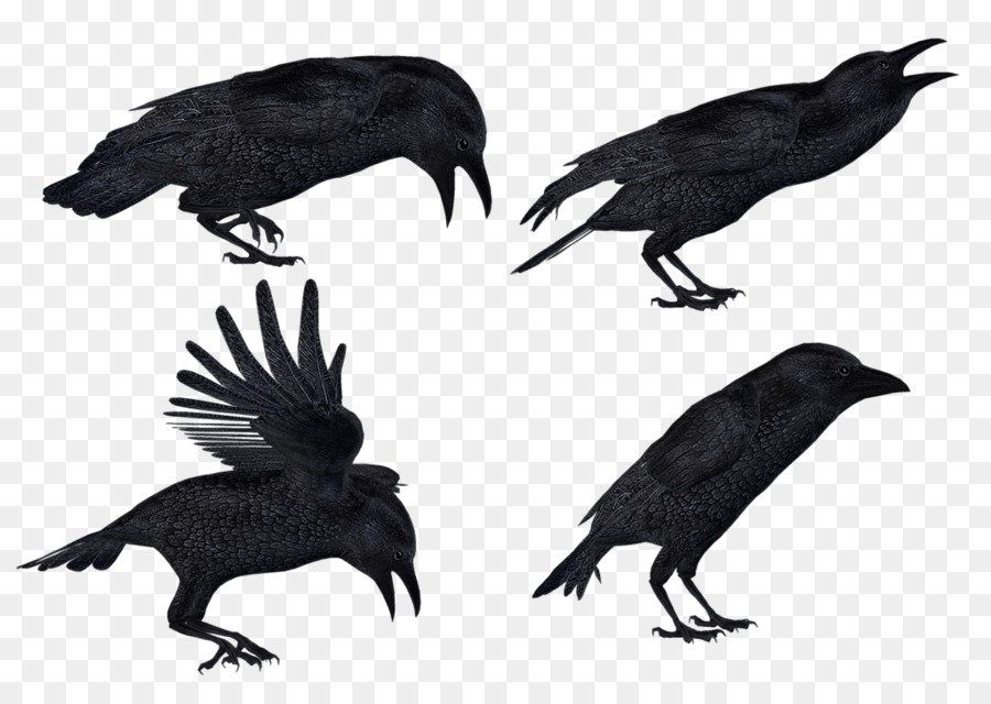 Flying Crow PNG Black And White - 153889