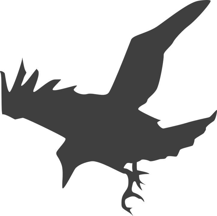 crow bird black fly land silhouette grey - Flying Crow PNG Black And White