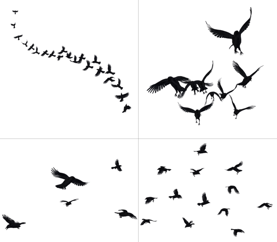 Crows In Flight PNG Stock by Roy3D PlusPng.com  - Flying Crow PNG Black And White