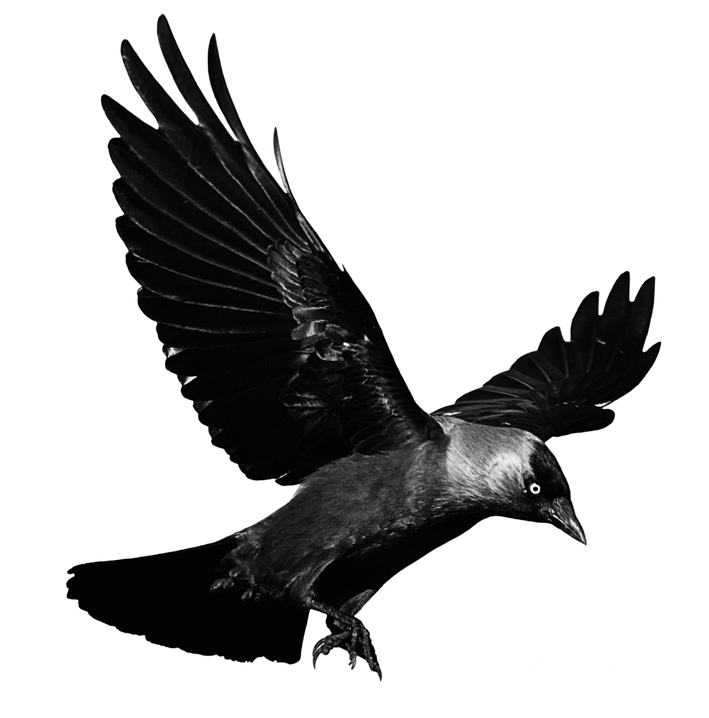 Flying Crow PNG Black And White