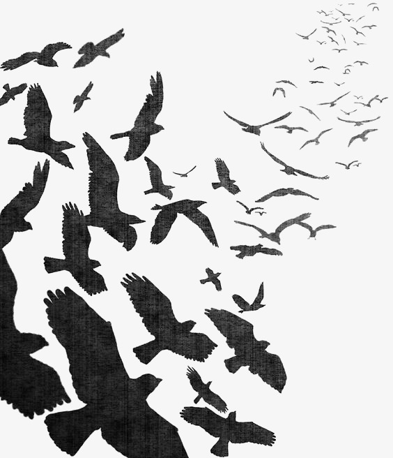 Watercolor Crow, Black Crow, Birds, Flying Crow PNG Image and Clipart - Flying Crow PNG Black And White