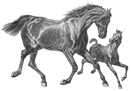 Free Mare and Foal Clipart - Foal PNG Black And White