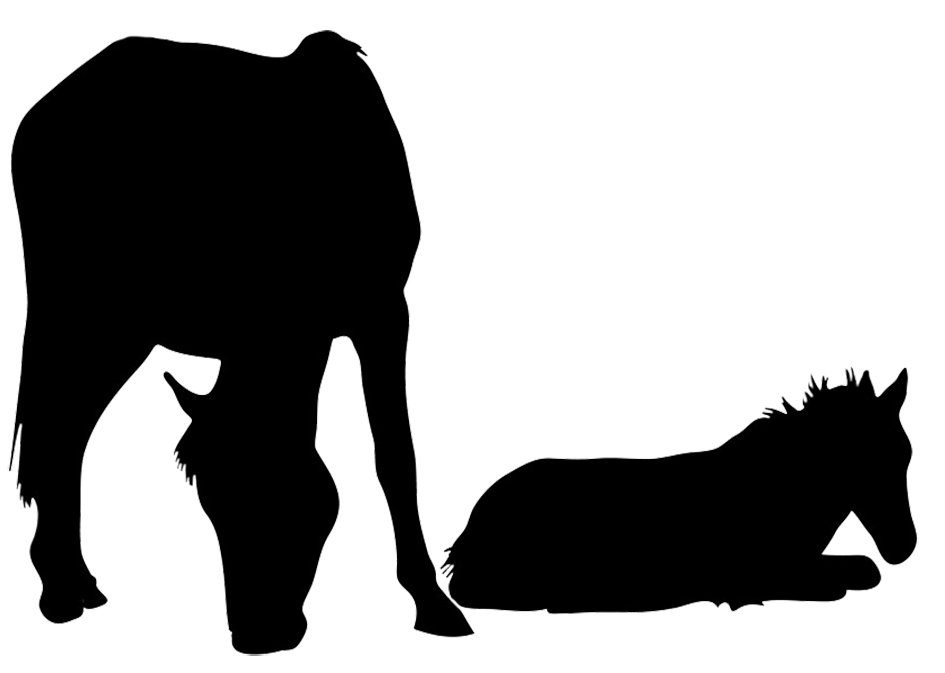 Horse Silhouette - Foal PNG Black And White