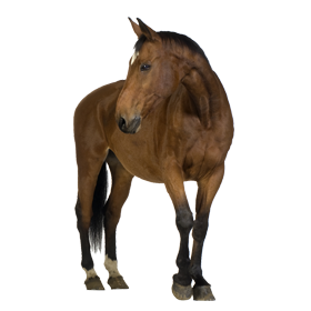 clipart brown horse png image, free download picture, transparent background - Foal PNG HD