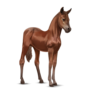 File:Chestnut Argentinean Criollo Foal.png - Foal PNG HD