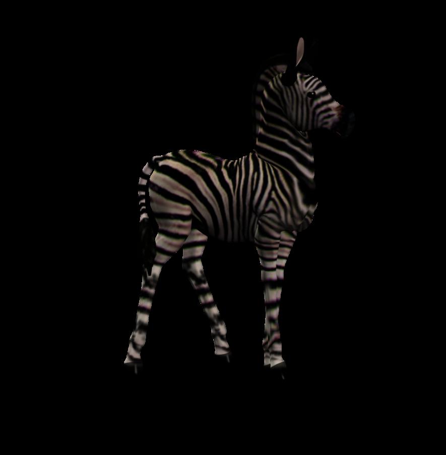 Zebra Foal 1 Png Stock by Direwrath PlusPng.com  - Foal PNG HD