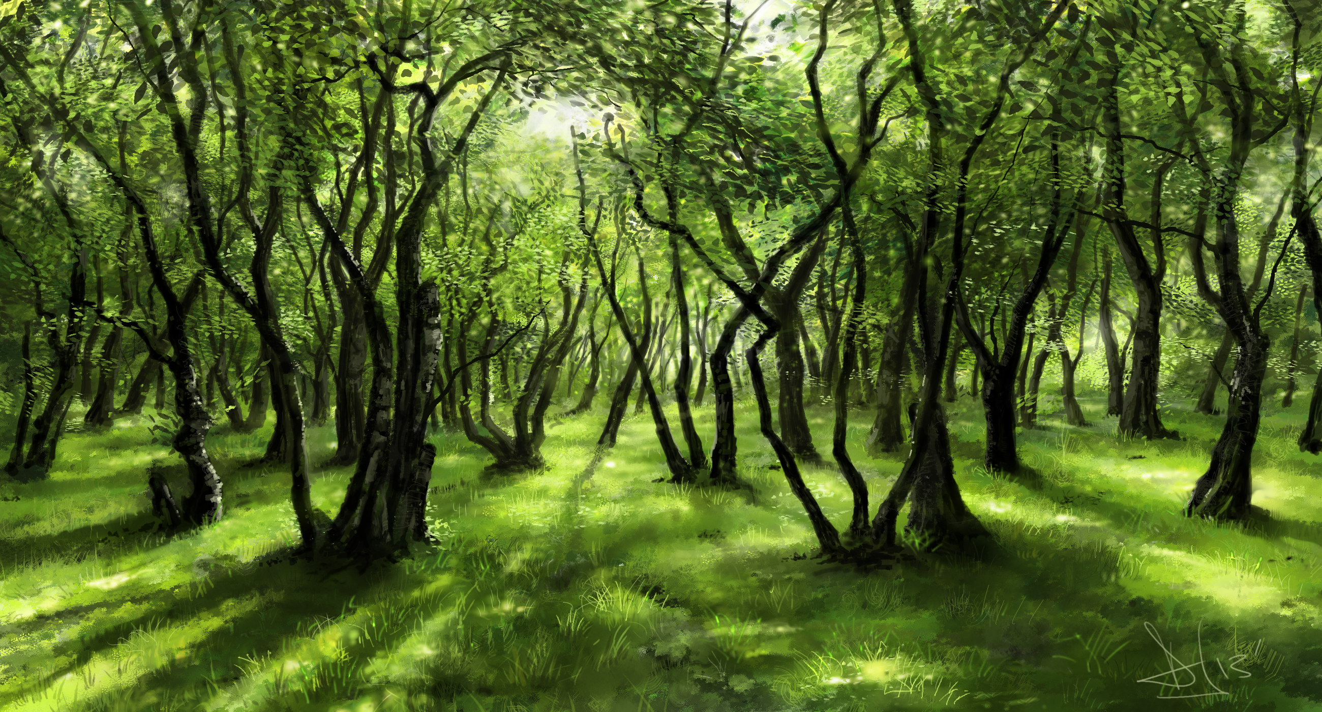 Forest PNG HD Images - 132007