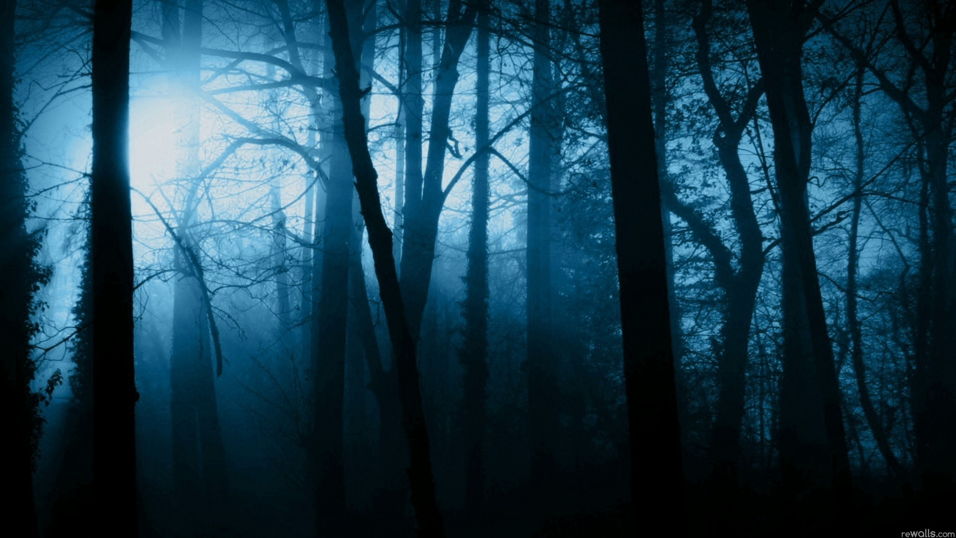 Forest PNG HD Images - 132010
