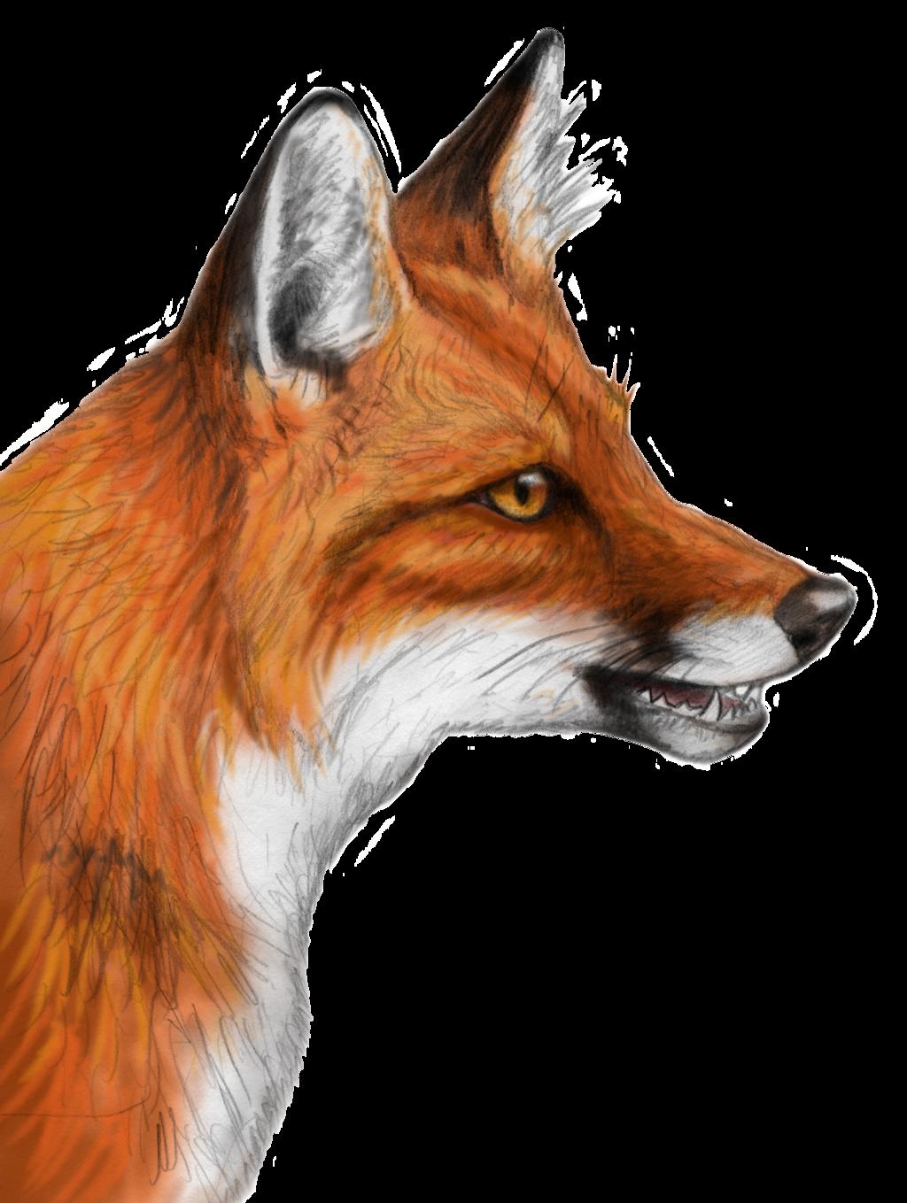 Fox PNG - 18764