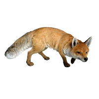 Fox PNG - 18755