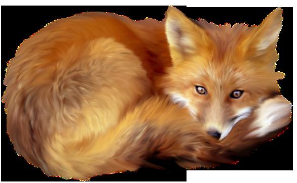 Fox PNG - 18752