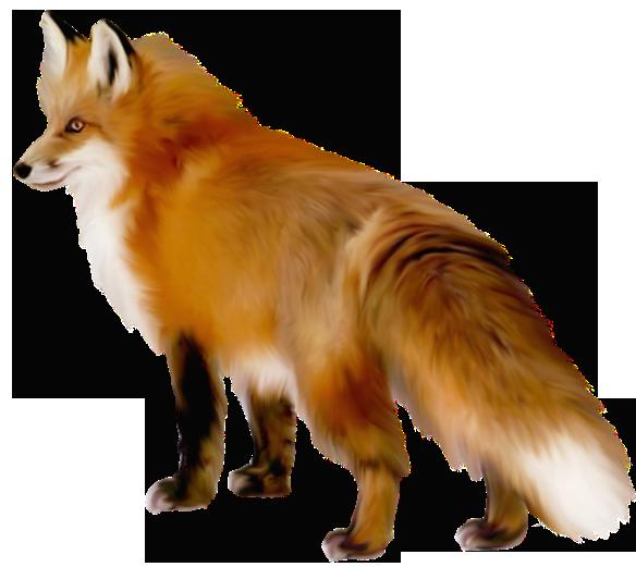 Fox PNG - 18757