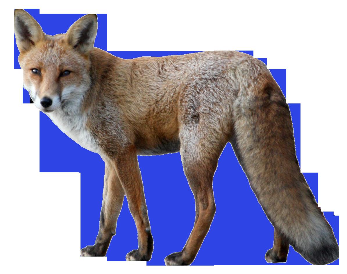 Fox PNG - 18748