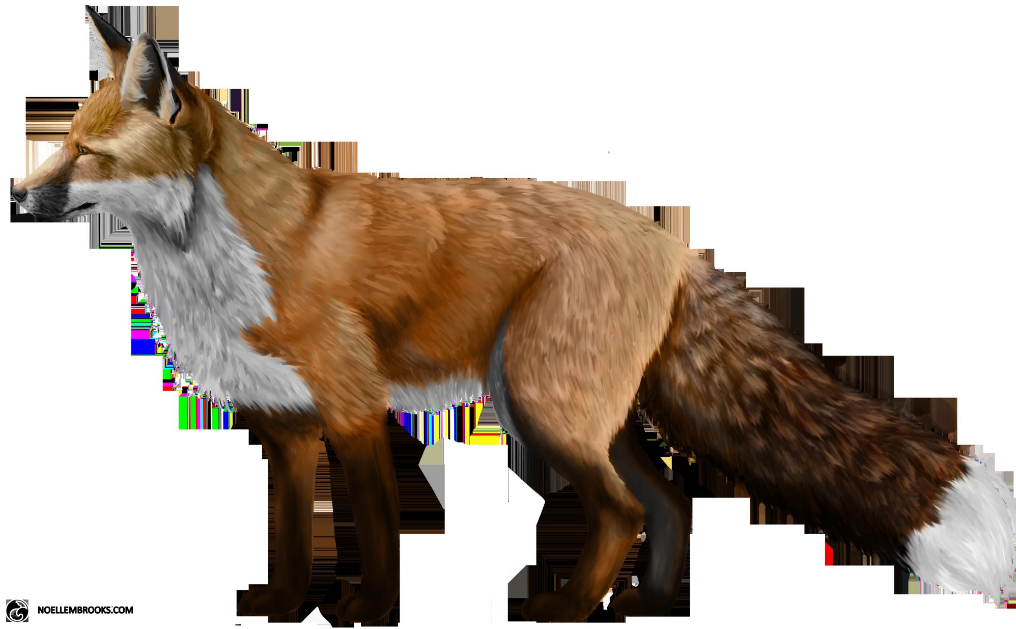 Fox PNG - 18751