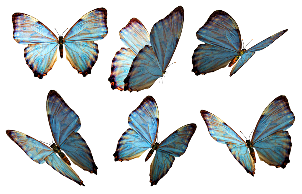 Free Butterfly PNG HD  - 130601