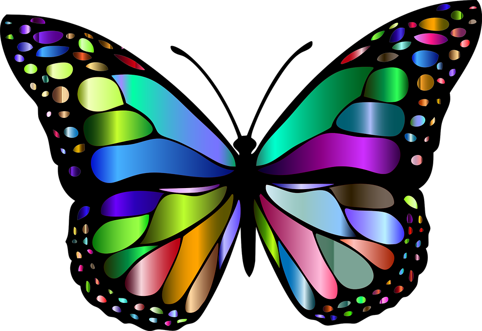 Free Butterfly PNG HD  - 130604