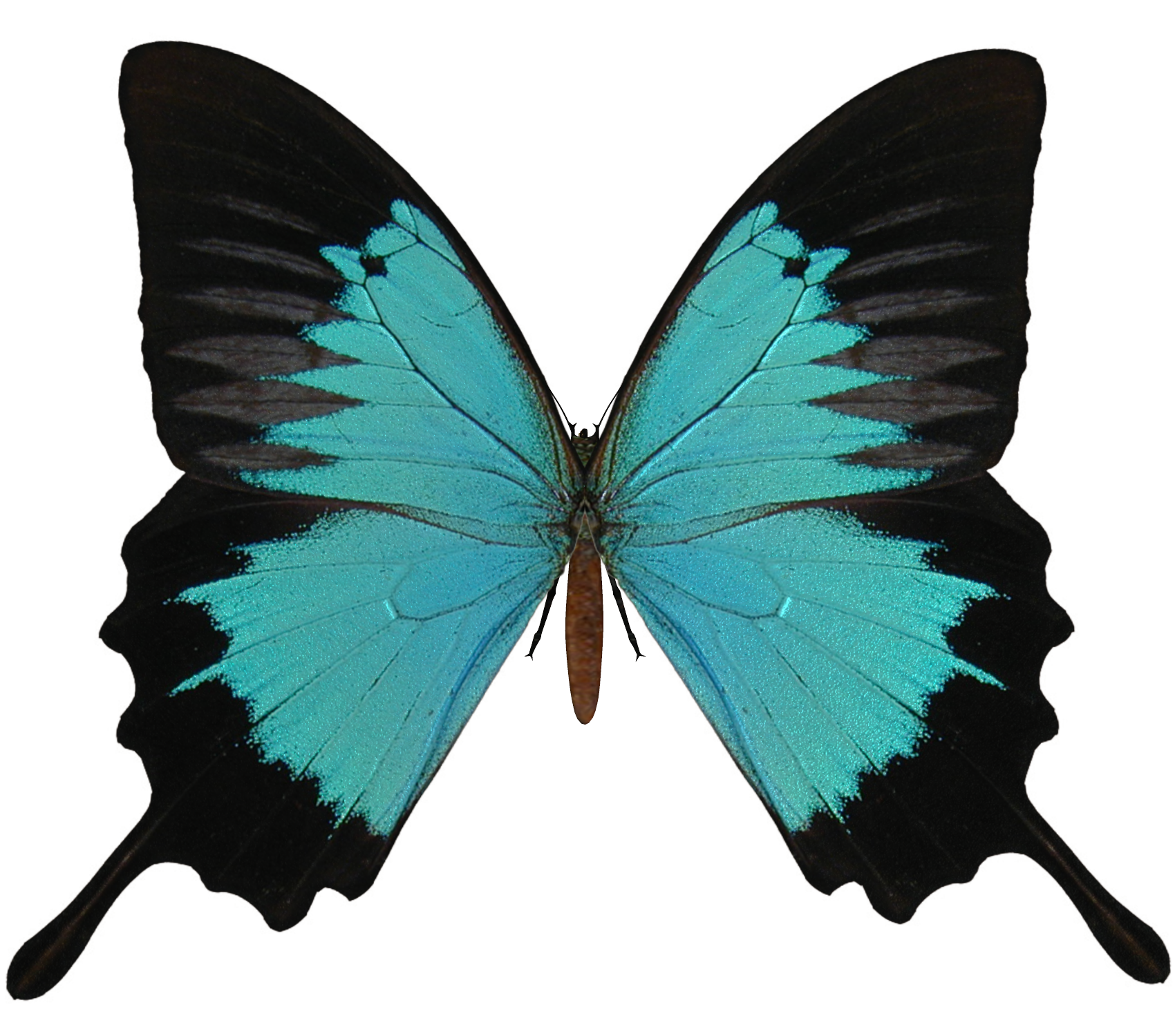 Free Butterfly PNG HD  - 130597