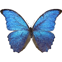 Free Butterfly PNG HD  - 130602