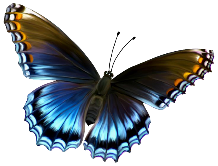 Free Butterfly PNG HD  - 130596