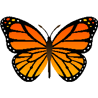 Free Butterfly PNG HD  - 130592