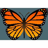 Orange Butterfly Png Image Butterflies Download PNG Image - Free Butterfly PNG HD
