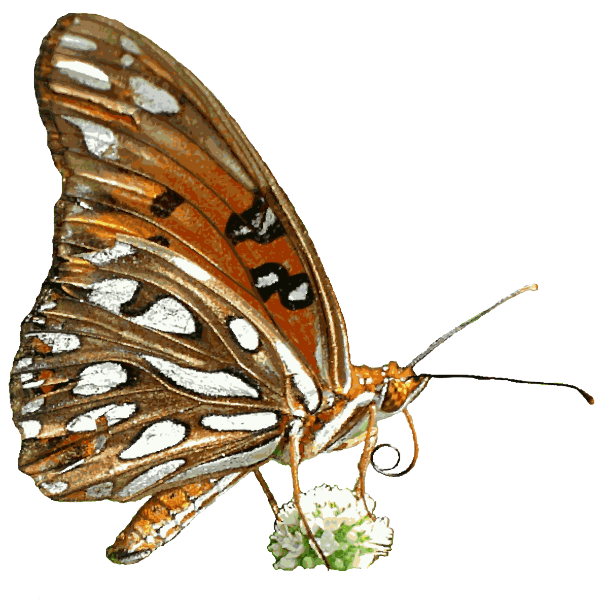 Gulf Fritillary Butterfly, Transparent Background Png - Free Gifs And PNG
